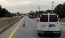 ABD'de kaz ailesi otobanda trafiği durdurdu