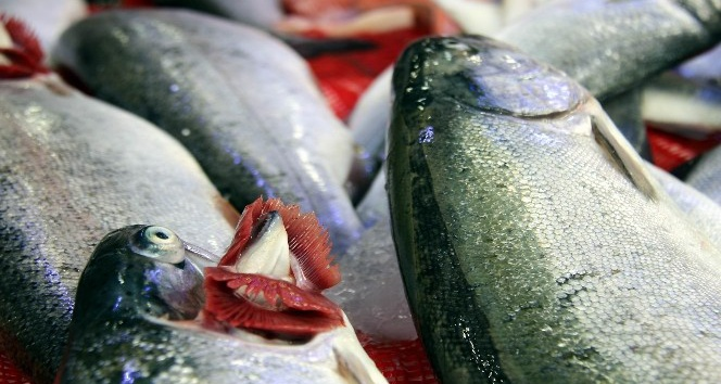 Balıkçılar Ramazandan umutlu