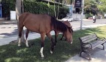 Sarıyerde başıboş at sürprizi