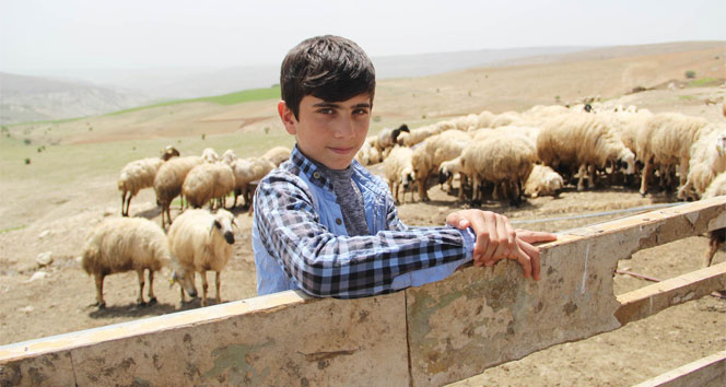 Koyun sağıp, çobanlık yapan Habibin TEOG başarısı