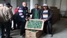 Bayburtta çiftçilere tohum ve fide desteği