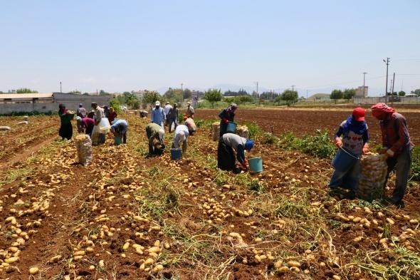 Tarım işçilerinin sıcakta ekmek mücadelesi