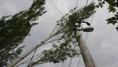 Şiddetli rüzgar ağaçları yerinden söktü