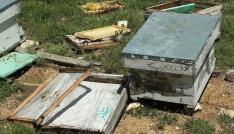 Sarıvelilerde ayı, arı kovanlarına zarar verdi