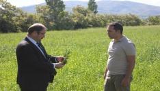 Erzincanlı çiftçiler yeni yem bitkilerinden memnun