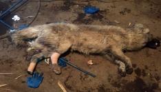 Ayakları kırılan köpeğe hayvanseverler sahip çıktı
