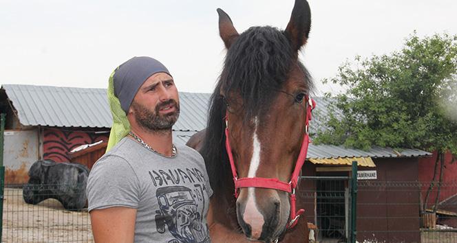 Ankara'da hasta hayvanlardan oluşan farklı bir çiftlik