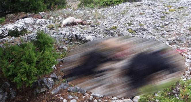 Karamanda yıldırım düşmesi sonucu 15 keçi telef oldu