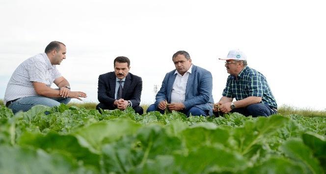 (Özel Haber) Yıllık 1 milyon ton pancar üretilen Aksaray Türkiye 3üncüsü