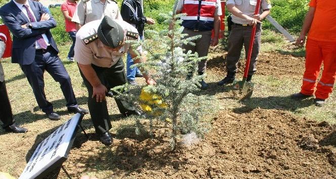 Jandarma Devrekte ağaç dikti