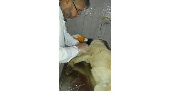 Yaralı köpek tedavi edilerek sahibine teslim edildi