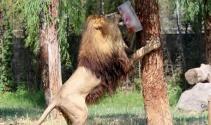 Vahşi hayvanlara dondurma servisi