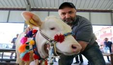 Kelkit Organik Tarım ve Hayvancılık Festivali yapıldı