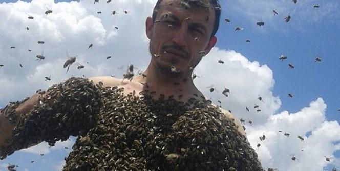 Bir kovan arıyı vücudunda toplayabiliyor...
