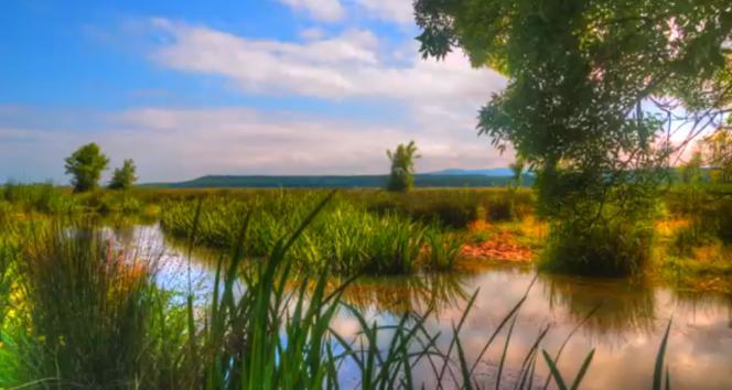 İğneada Longuz Ormanlarının tanıtım filmi hazırlandı