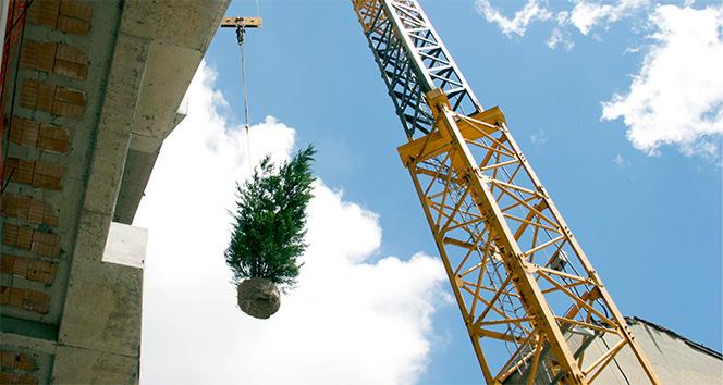 Dikey Ormanın ilk ağacı 40 metre yüksekliğe dikildi