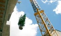 'Dikey Orman'ın ilk ağacı 40 metre yüksekliğe dikildi