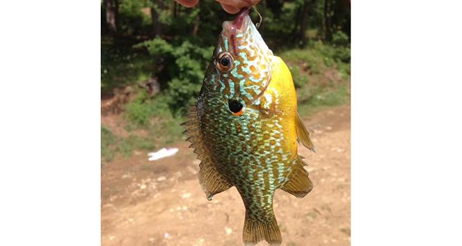 Bursada gölette yakalanan balık şaşırttı