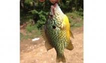 Bursa'da gölette yakalanan balık şaşırttı