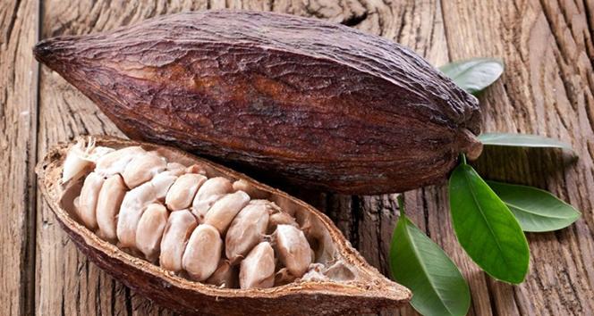 Bronzluk için kullanılan kakao yağının bilinmeyen etkileri