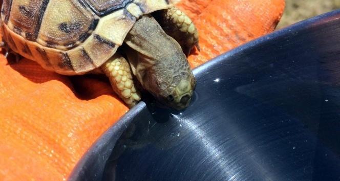 Susayan kaplumbağaya kendi bardağından su içirdi