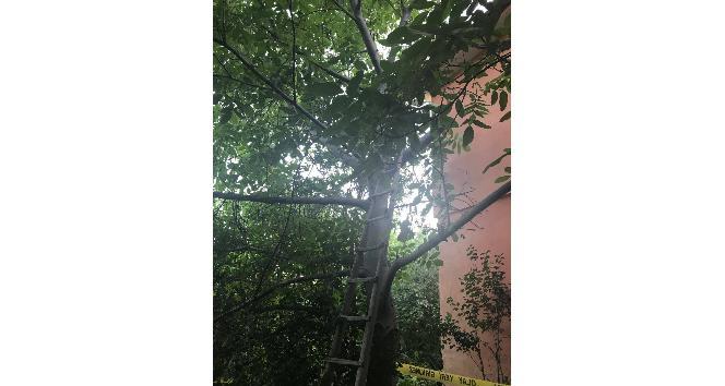 Ceviz ağacını budarken düşüp öldü