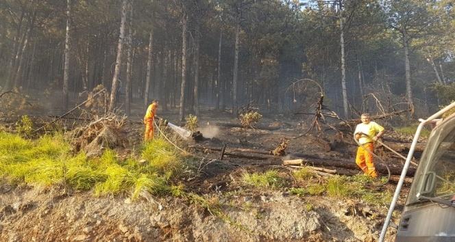 Bursada orman yangını: 5 hektar kül oldu