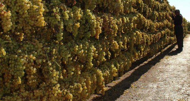 İyi tarım uygulamalarıyla kuru üzümde okratoksin tehdidi aşılacak