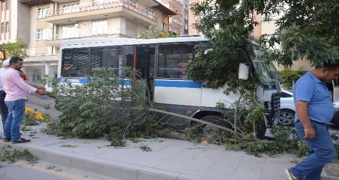 Freni patlayan minibüs ağacı yıktı