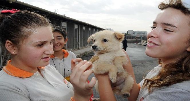 Büyükşehir'den sertifikalı Pet Shop eğitimi