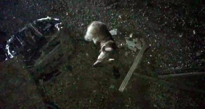 Bozayıları Sarıkamışlı otelciler besliyor