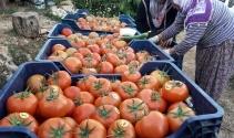 Prof. Dr. Canan Karatay'ın domates açıklamasına tepki
