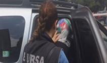 Bursa'da uyuşturucu operasyonu !