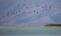 Van Gölünde flamingoların dansı