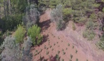 Jandarmadan dronelu uyuşturucu operasyonu