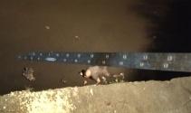 Alkollü şahıs, atık suların aktığı dereye düştü