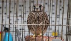 (Özel haber) Yabani kuşlar vahşi yaşama dönmek için gün sayıyor