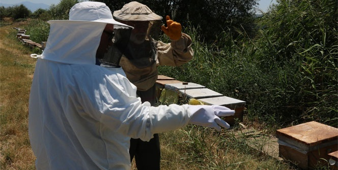 Vicdansız hırsızlar arı kovanlarını çaldı
