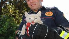 Yavru kedinin imdadına itfaiye yetişti