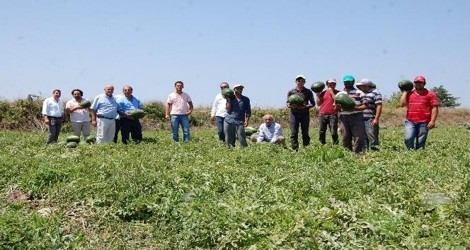 Bafra Ovasında karpuz hasadı başladı