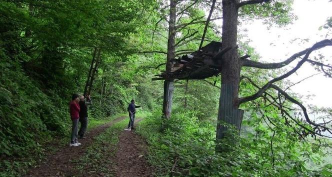 Artvin'de bal ormanlarında bal hasadı başladı