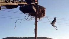 Elektrik tellerine takılan leylek kurtarıldı
