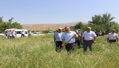Erzincanda ilk kez İtalyan çimi alternatif yem bitkisi Tarla Günü düzenlendi