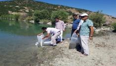 Tuncelide gölete 30 bin yavru sazan bırakıldı