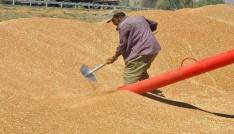 Çiftçiler buğday satışına başladı
