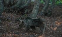 Uludağ'a çıkacak dağcılara 'ayı' uyarısı