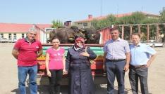 Muşlu genç çiftçilere mandaları dağıtıldı