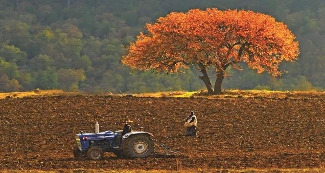 Aydın'da traktör sayısı 44 bin 674 oldu
