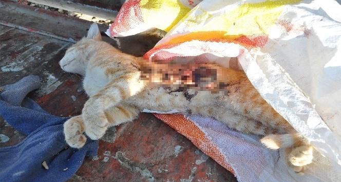Kedileri silahla öldürüp çöp kovasına attılar