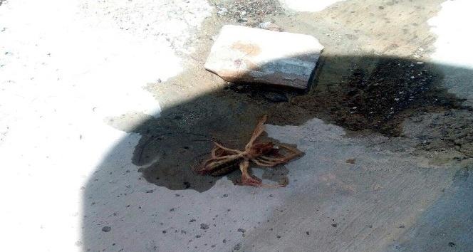(Özel Haber) Et yiyen örümcek Kayseri'de görüldü